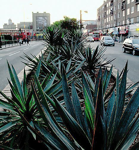 Tropic of South-East London: Palms and uccas on display