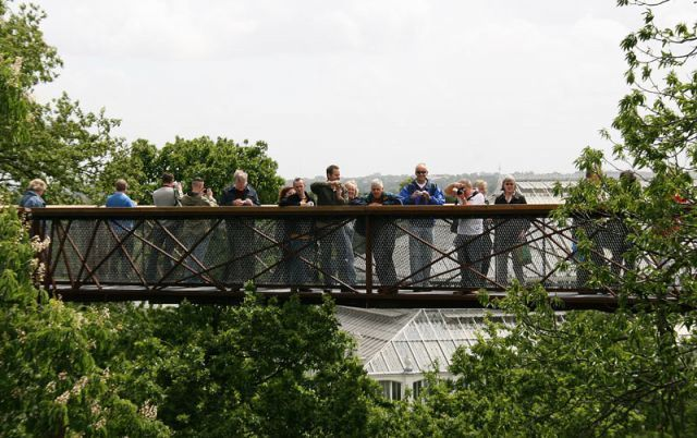 Some of the group a top the tree top walkway!