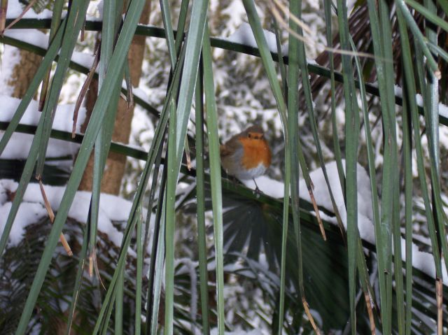 A robin comes to inspect the snow clearing!